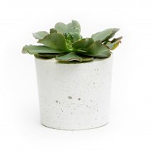 Pop Plant Concrete Straight Pot $65 - Melbournalia