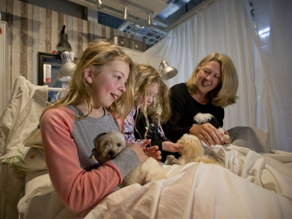 Waking up to puppies in bed at Airbnb at IKEA, via WeeBirdy.com