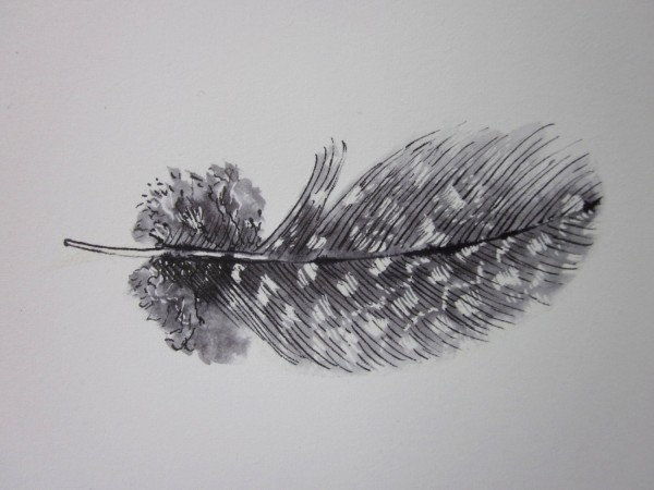 Black and white guinea fowl feather #2 original ink drawing, , by Anne 4 Bags.