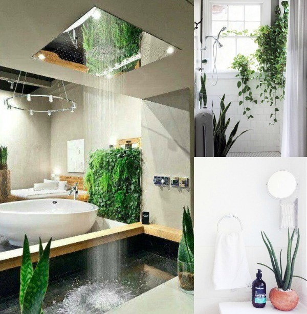 Clever ways to use plants in bathroom