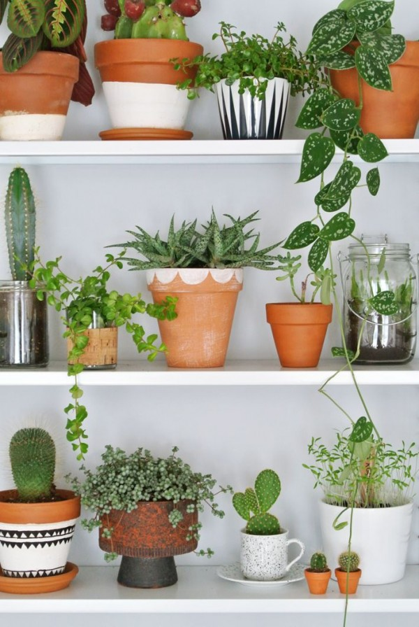 Gorgeous plants on shelves, by Enter My Attic. Pictures by Marij Hessel.