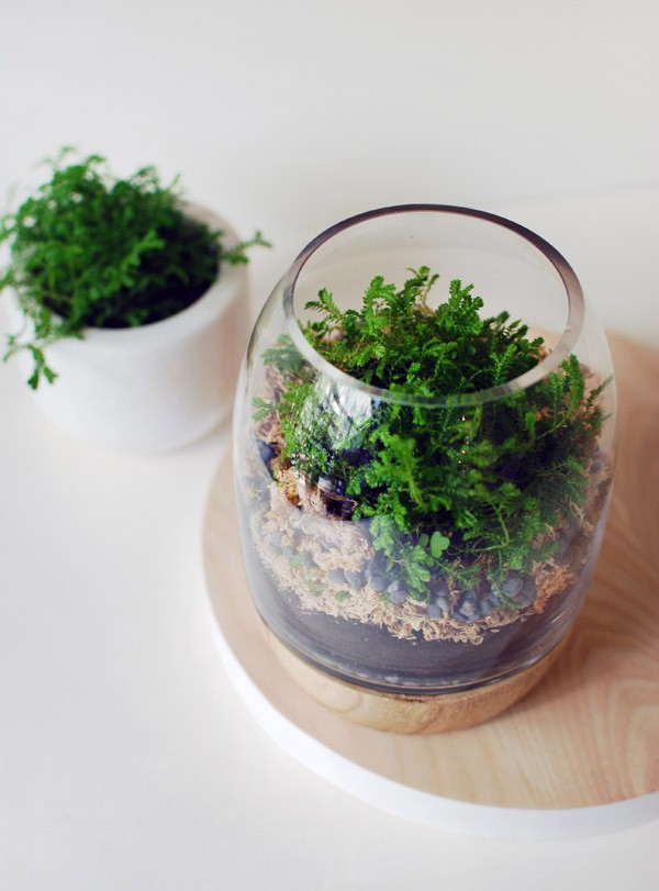How to make a moss terrarium by re-purposing a timber and glass candle holder. Photo: Lisa Tilse for We Are Scout