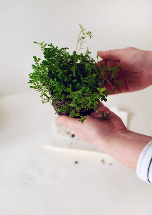 Insert small plant into soil. Photo: Lisa Tilse for We Are Scout