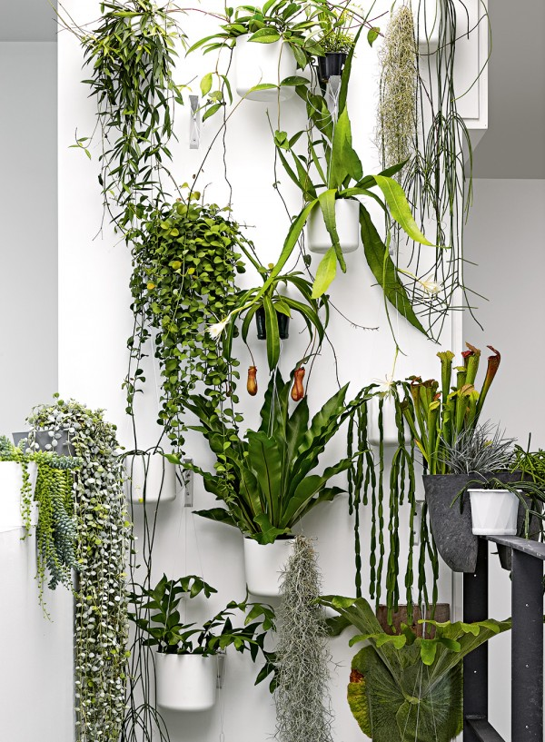 The plant wall at the home of Craig Miller-Randle (who runs MRD Home). Styling by Deb McLean and photography by Colin Doswell for Inside Out magazine September 2015.