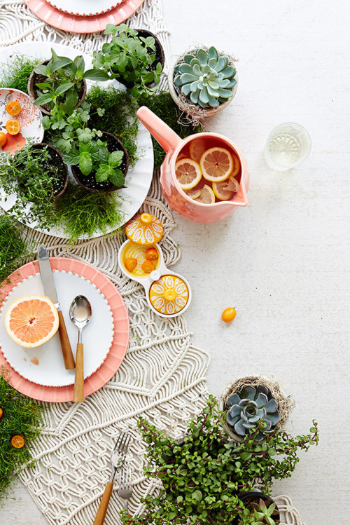 Succulents and macrame via Anthropologie.